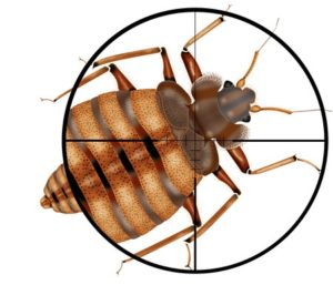 Louisiana Bed Bug Control