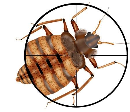Louisiana Bed Bug Control