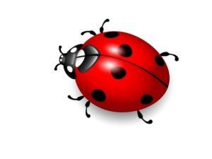 13187467 - ladybird vector illustration of ladybug on white background eps10