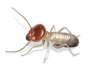 Louisiana termite Control