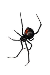 Tyler Texas Spider Control