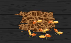 illustration termite nest at wooden black wall, burrow nest termite and wood decay, texture wood with nest termite or white ant, background damaged white wooden eaten by termite or white ants